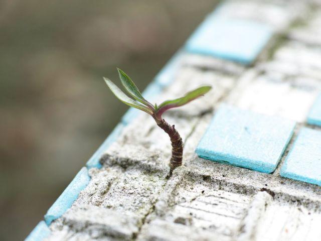 esperanza - brote verde